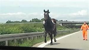 Pferd, Auf, Einer, Autobahn