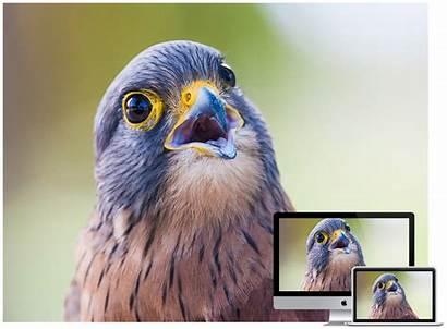 Birds Wallpapers Desktop