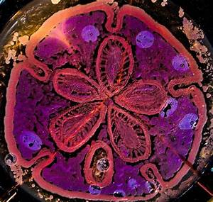 Scientists Make Art Using Bacteria Grown In Petri Dishes