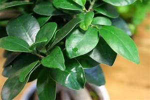 Bonsai Baum Schneiden : bonsai schneiden der form blatt und wurzelschnitt ~ Frokenaadalensverden.com Haus und Dekorationen