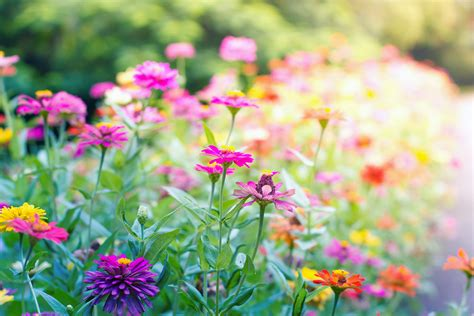 plants for butterfly garden grow a butterfly garden 8 easy tips reader s digest