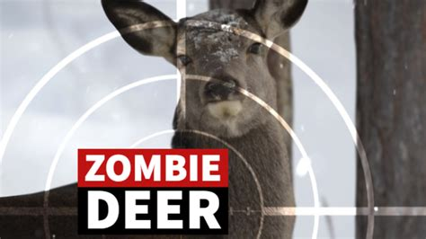 zombie deer disease states illinois found counties could texas humans spread stories cdc