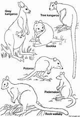 Coloring Australian Pages Animals Animal Printable Australia Template Colouring Kangaroo Templates Printables Mammals Colour Tree Aus Native Drawing Aussie Aboriginal sketch template