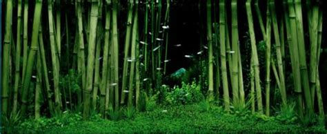 Bamboo Aquascape by Bamboo Forest Aquascape Goldfish Tank
