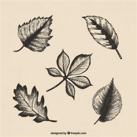 Hand gezeichnete Blätter Download der kostenlosen Vektor