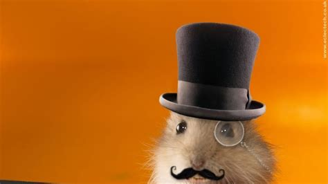 fondo gracioso de hamsters  fondos de