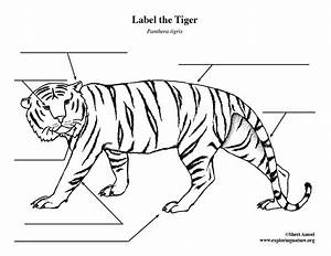 Tiger Labeling Page