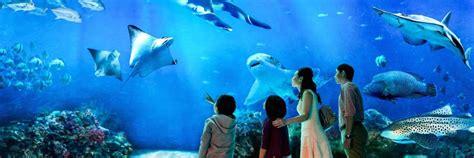 s e a aquarium buy tickets hapz