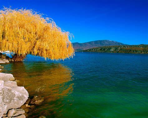 nature landscape beautiful lake wood sad willow autumn