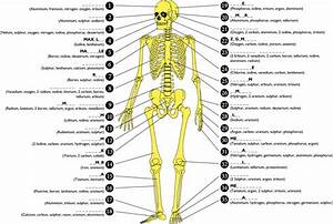 206 Bones Of The Body Diagram