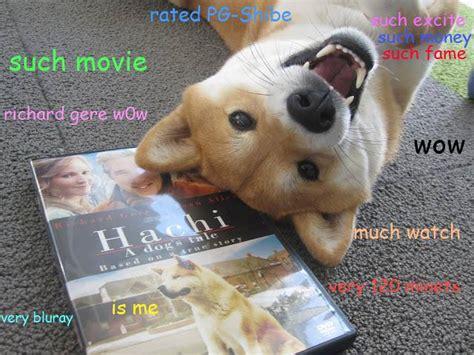 Wow Dog Meme - moiv shebe meme wow comics and memes