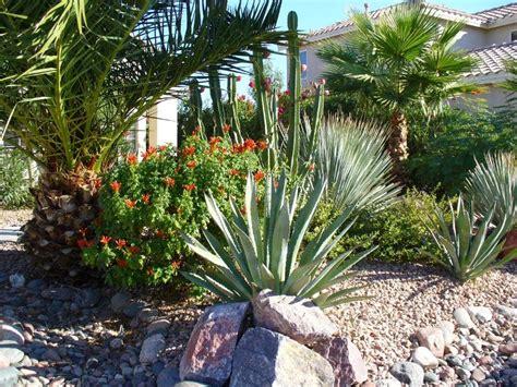 desert botanical garden plant sale desert landscaping