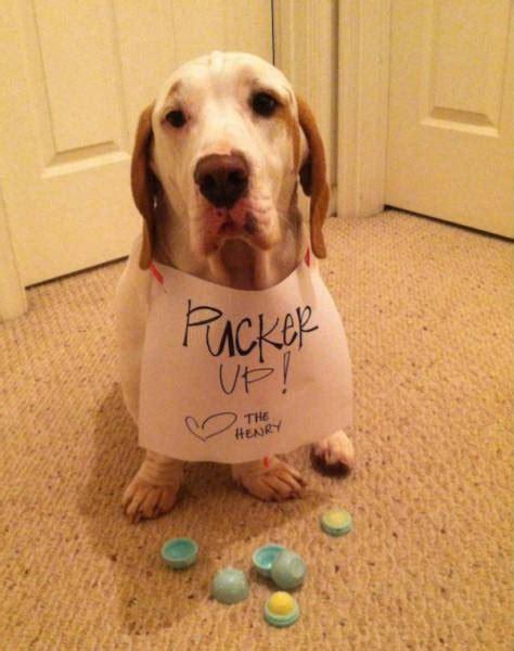 dog shaming animals