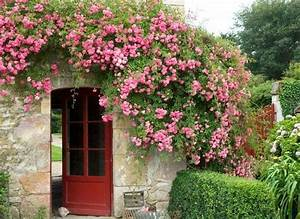 les 25 meilleures idees de la categorie plante grimpante With decoration mur exterieur jardin 12 kiwi plantation taille et entretien