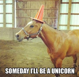 Funny Pony Memes - funny horse memes 13 pics
