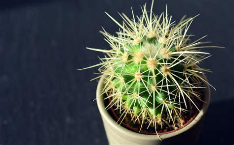 แคคตัส พืชอวบน้ำอัญมณีของนักสะสม และ 7สิ่งควรรู้ ก่อนเริ่ม ...