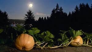 Jardiner Avec La Lune : jardiner avec la lune le calendrier 2015 ~ Farleysfitness.com Idées de Décoration