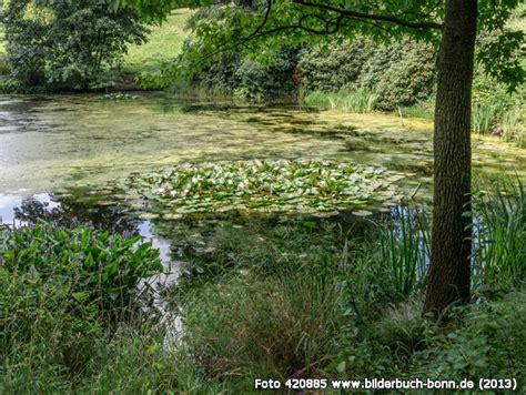 Am Botanischen Garten Bonn Haltestelle by Bilderbuch Bonn Arboretum Park H 228 Rle Teich Im Waldpark