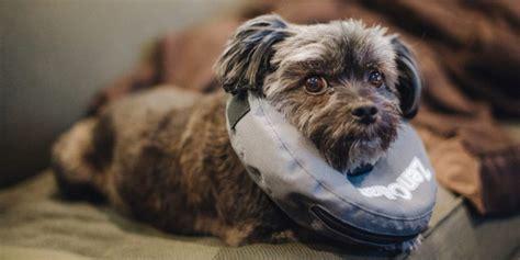 › top pet insurance companies 2020. health insurance tips #HealthInsurance in 2020   Pet insurance reviews, Cat insurance, Best pet ...