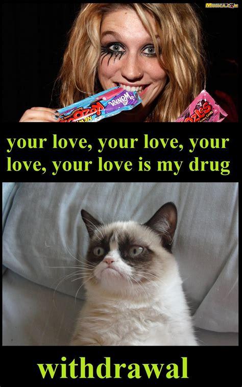 kesha keha  grumpy cat meme  memes pinterest