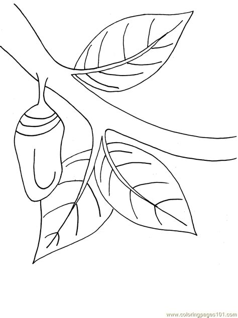 chrysalis coloring page  caterpillar coloring pages