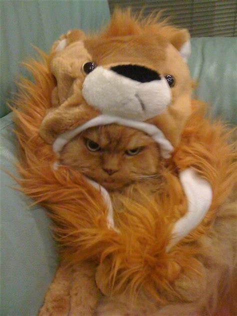 owe  cat  apology  pics