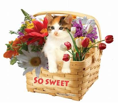 Sweet Thank Birthday Hello Hi Morning Scraps