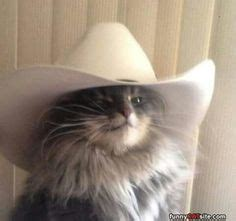 Cat mom does not approve of stealing >:3. 40 Best Cats/Cowboy/Cowgirl images | Cats, Animals, Cats ...