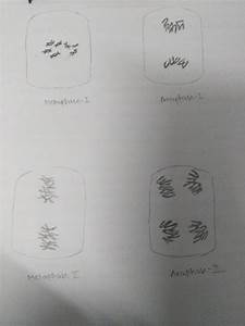 What Are The Microscopic Diagrams Of Different Stages Of