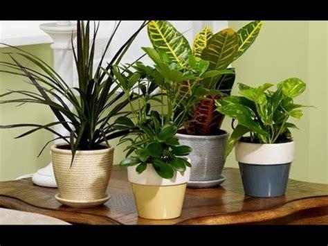 como cuidar  mantener las plantas de interior dr matta