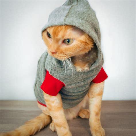 stylish cat cat images 70 fashion stylish cats funnycatsgif com