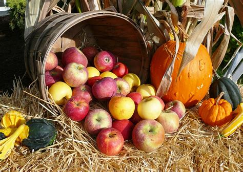 Harvest Plentiful - Laborers Few - Vicki Lake