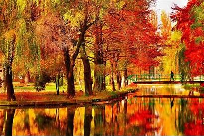 Fall Pretty Backgrounds Autumn Tree October Background