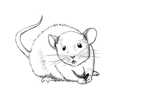 The Gallery For --> Mouse Drawing