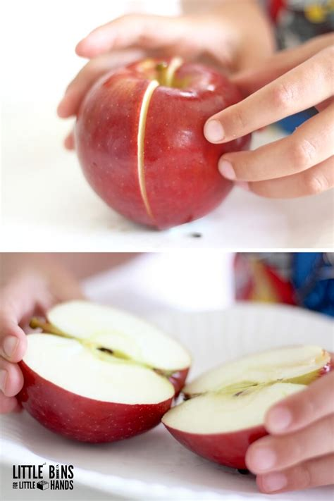 Apple fractions Math with Real Apples And Free Printable