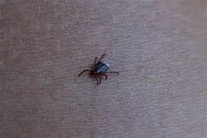 Different Types of Ticks in Pennsylvania