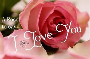 Rose Flower: I Love U Rose Flower