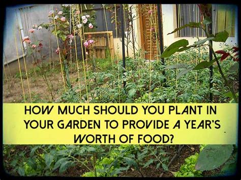 How Many Years Of Should Be On A Resume by How Much Should You Plant In Your Garden To Provide A Year S Worth Of Food Shtf Prepping
