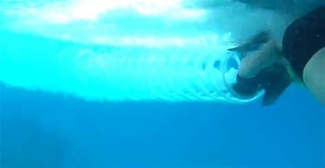 Boat Propeller Underwater by Diver Struck By Propeller On Underwater