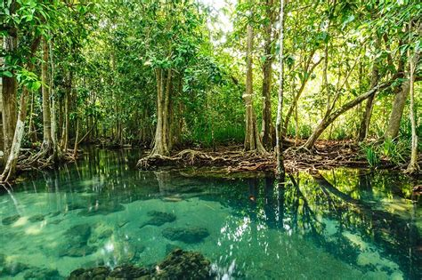 Every Day Should Be International Mangrove Day Blue