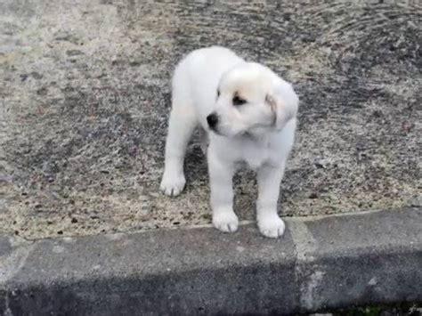 un petit chien dans la rue un petit chien dans la rue