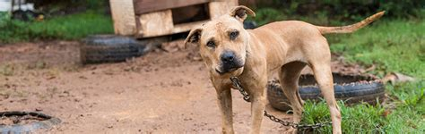 breaking news aspca assists rescue dogs north