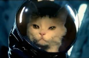cat astronaut astronaut cat pics about space