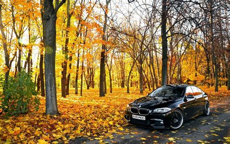 black bmw in forest hd cars 4k wallpapers images