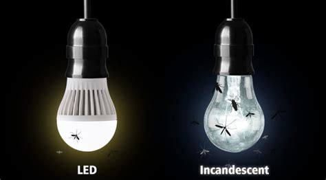 why are bugs attracted to light do led lights attract bugs superbrightleds com