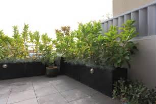 kletterpflanzen balkon balkon sichtschutz balkon pflanzen balkon sichtschutz pflanzen lattenrost kletterpflanzen