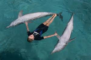 Trainer Training Dolphins