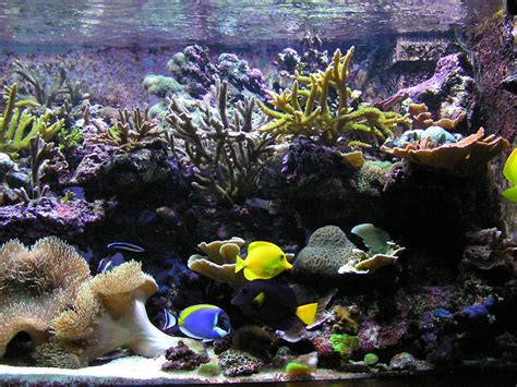 kit aquarium eau de mer complet file aquarium r 233 cifal jpg wikimedia commons