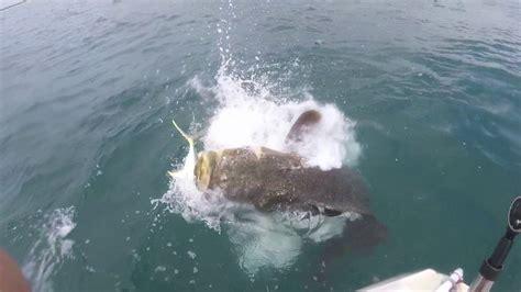 grouper pound slow motion