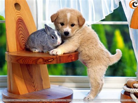 Pet Animals Wallpaper - lovely pet wallpaper lovely pets pictures animal